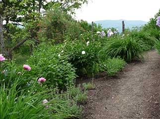 Olana-Flower-Garden-Hasbrook