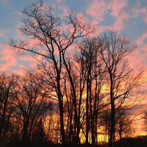 Treetorial, photo credit Elizabeth Schanz