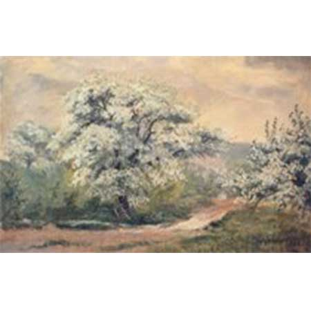 Apple Blossom NC